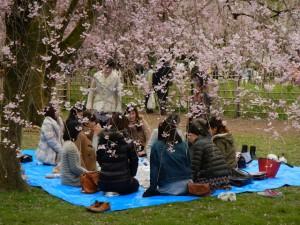 1. Kyoto - Cherry Blossom 2-37